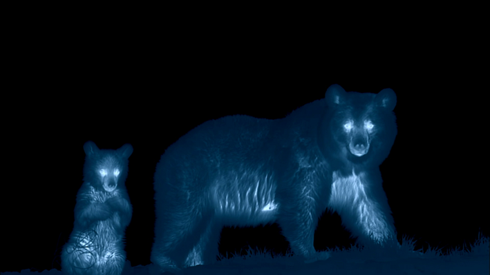 Infrared Image of a Mother Bear and Cub