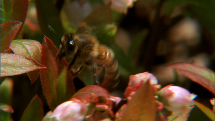 Disappearance of the Bees - What's the Impact?