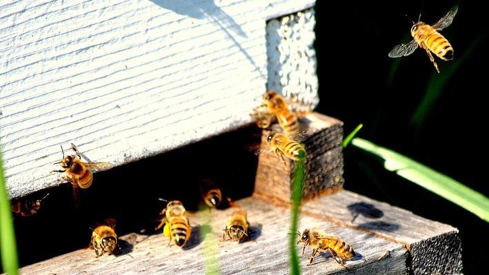 Reclaiming Habitat for Honeybees
