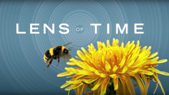Lens of Time: Bumper Bees