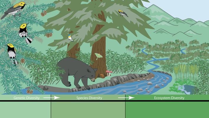 Three Levels Of Biodiversity Science Interactive Pbs Learningmedia