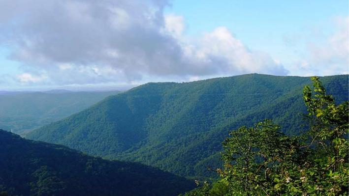 Biodiverse Regions: Black Mountain