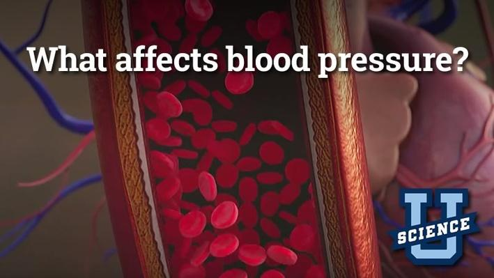 What Affects Blood Pressure? | Science-U
