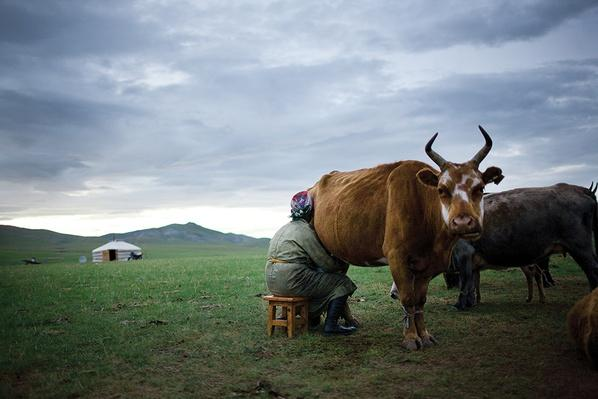 Animals are Milked at Dusk | Global Oneness Project
