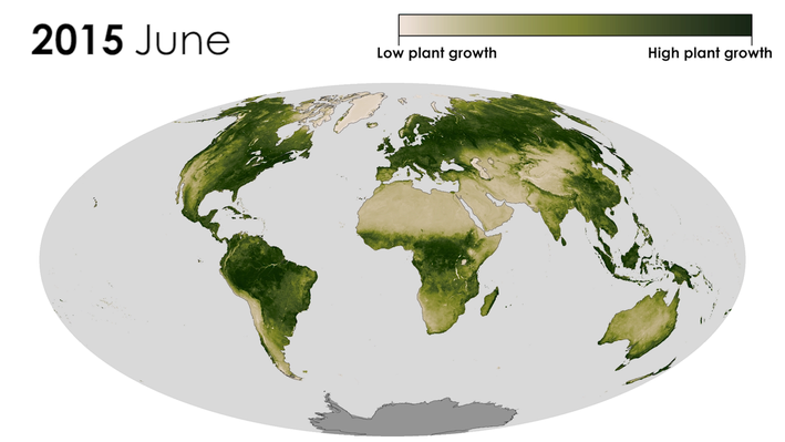 Linking Vegetation Growth to Rainfall