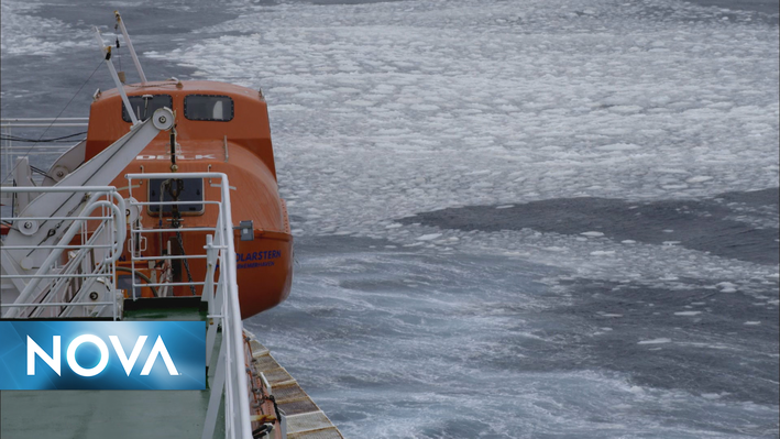 Mystery Beneath the Ice | Phytoplankton and Krill