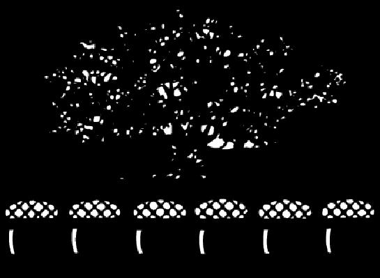 Acorns, Large Oak Tree | Clipart