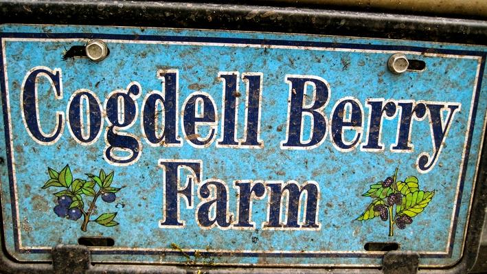 Cogdell Berry Farm | Fast Forward