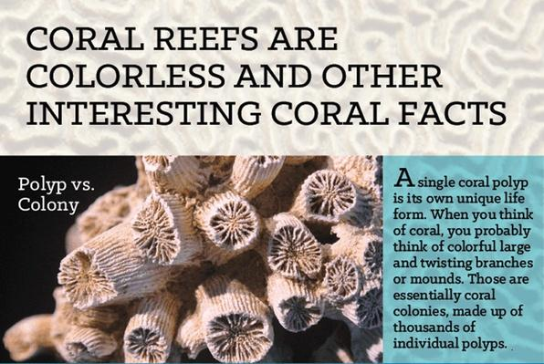 Coral Reefs are Colorless