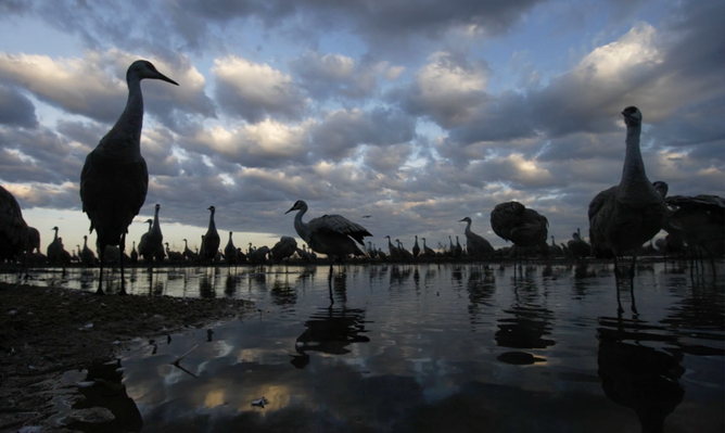 Time-Lapse: Crane Roost on the Platte River