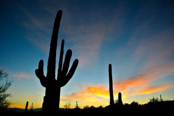 The Desert landscape of Arizona
