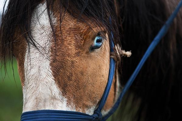 A Variety of Horse Breeds | Global Oneness Project