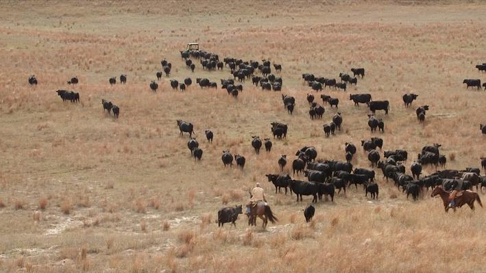 Ranching in the Sandhills: A Day on the Switzer Ranch | Platte Basin Education
