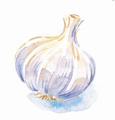 Head of Garlic | Health and Nutrition