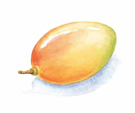 Mango | Health and Nutrition