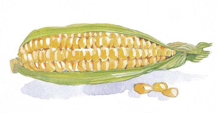 Corn on the Cob | Health and Nutrition