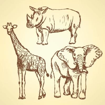 Sketch: Giraffe, Elephant, Rhino | Clipart