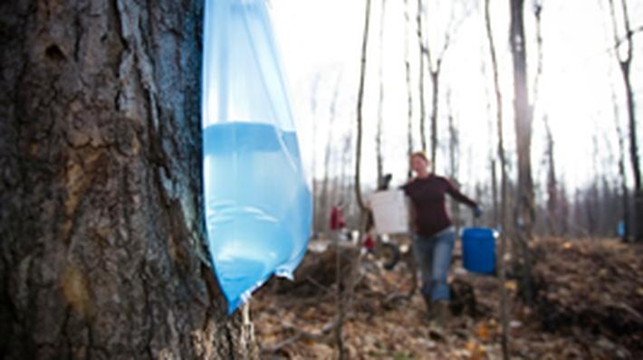 Climate Wisconsin | Sugaring