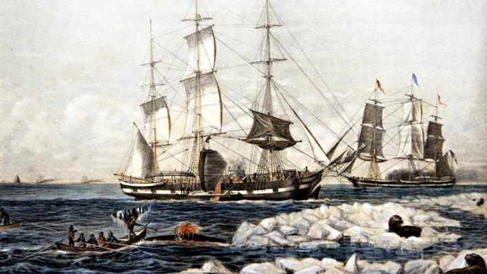Bowhead Whaling and Its Impact