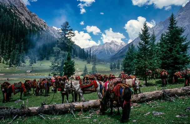 Horses at a Picnic | Global Oneness Project