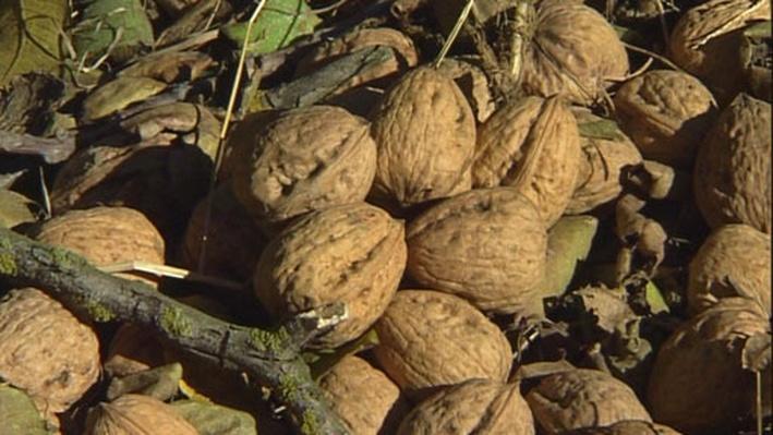 Walnuts - Health & Harvest | America's Heartland