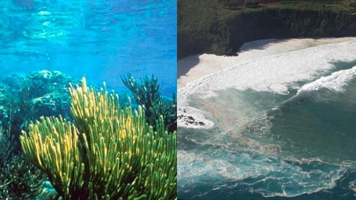 Coastal Geological Processes
