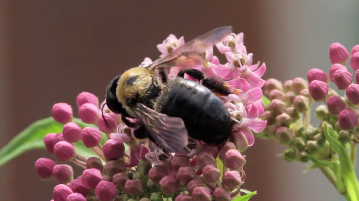 Fears in the Garden: Video | Nature Works Everywhere