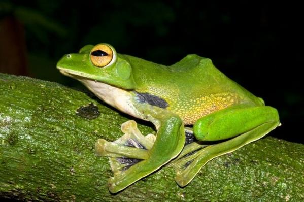 More than 300 Species Discovered in Southeast Asia - Article