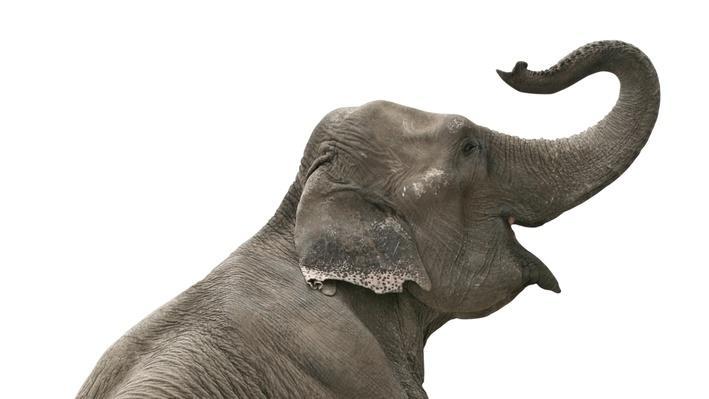 Man versus Elephant!