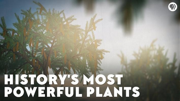 History's Most Powerful Plants | Eons