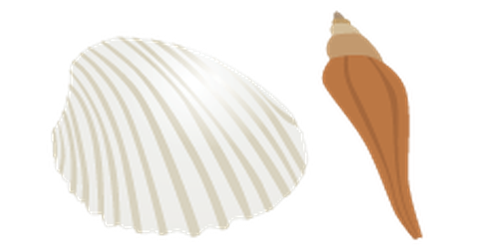 Summer Beach Set - Seashells | Clipart