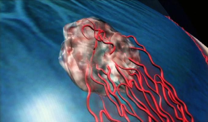 Blood Vessels Help Tumors Grow