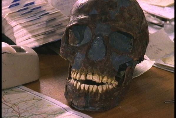 Homo Sapiens Versus Neanderthals