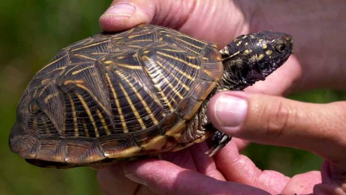 Scientists Study Endangered Species in Iowa's Big Sand Mound Nature Preserve | Iowa Land and Sky