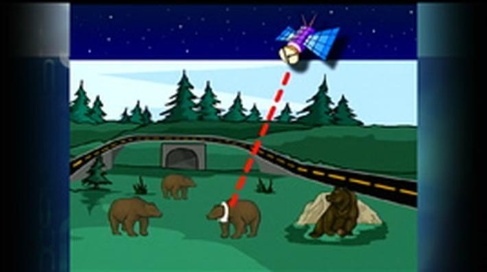 Bear Research