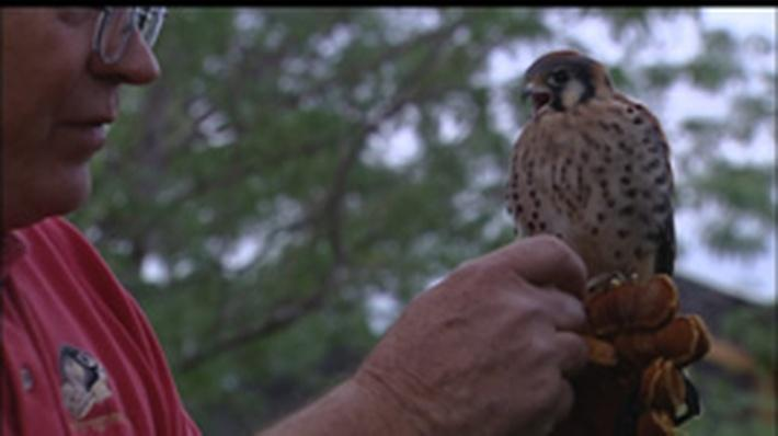 Falconry | Science Trek