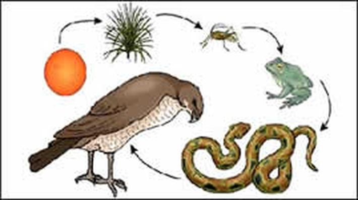 Food Chain | Science Trek | Science | Video | PBS LearningMedia