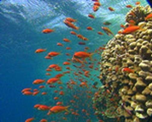 Marine Fisheries & Aquaculture | Salmon Scavenger Hunt: Answer Key Handout