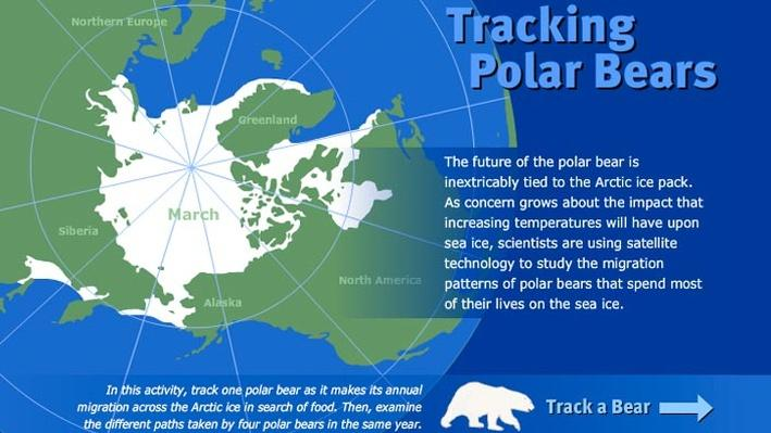 Tracking Polar Bears