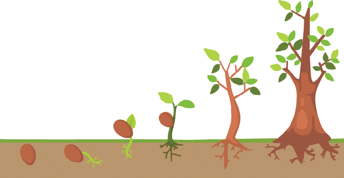 Tree Life Cycle | Clipart