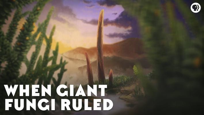 When Giant Fungi Ruled | Eons