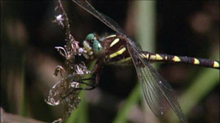Dragonflies in Kentucky | Kentucky Life