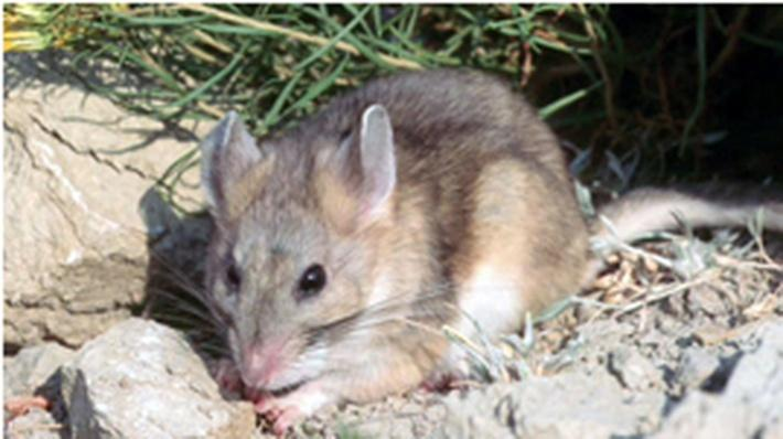 Resurveying California's Wildlife