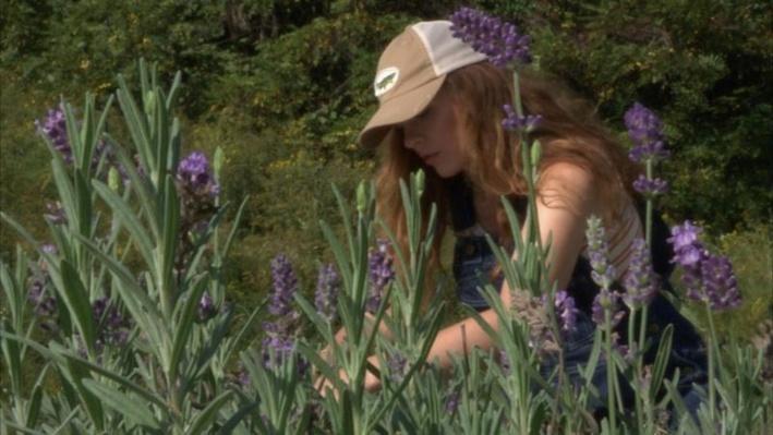 Lavender Farming | Appalachian Innovators