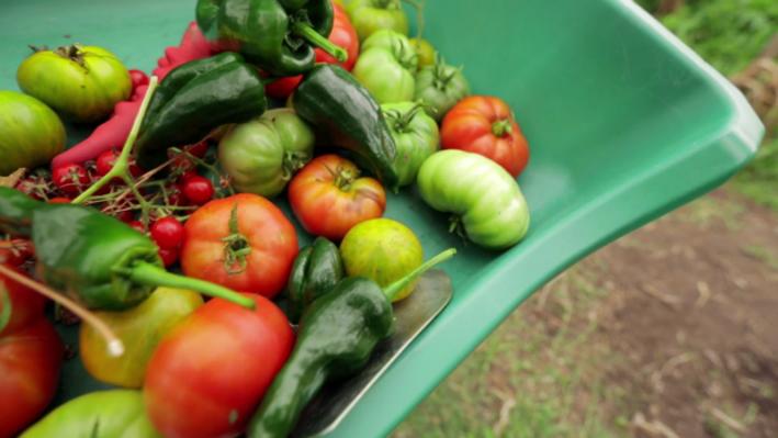 The Local Tomato | Video