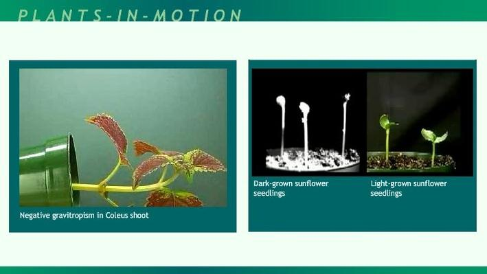 Plants-in-Motion