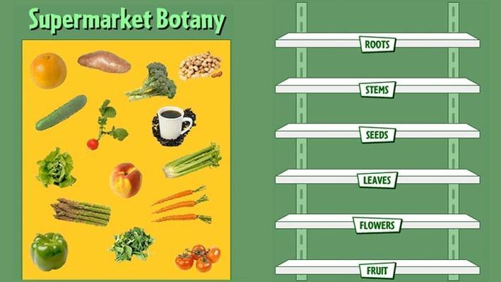 Supermarket Botany