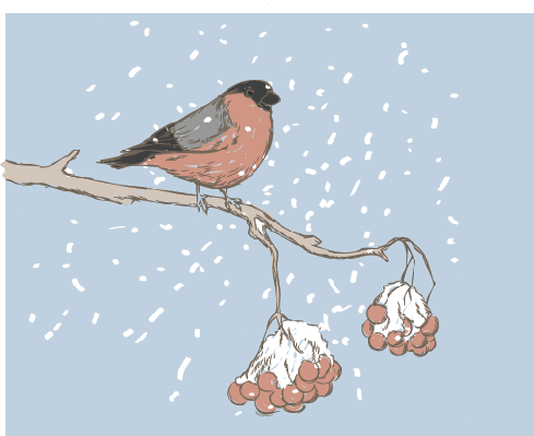 Four Seasons Scenery - Bullfinch in Winter | Clipart