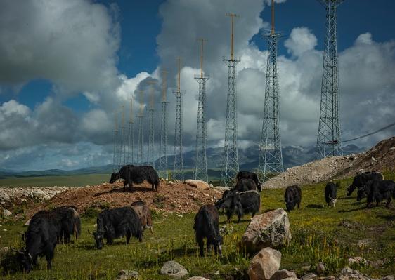 Yaks Graze Among Pylons | Global Oneness Project
