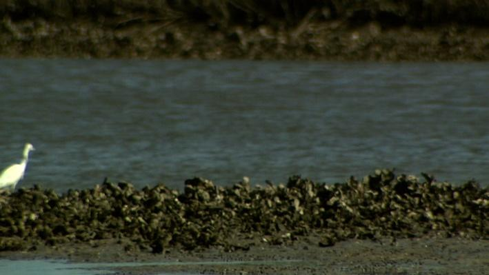 Oh Shuck! | Oyster Farming: Threat of Vibrio Infection